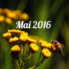 mai 2016 - alzire